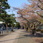 十和田の桜の見頃は?官庁街通りの桜は市役所の無料展望台から見るのがオススメ!