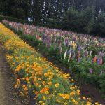 十和田市の鯉艸郷(りそうきょう)でお花の写真を撮って来ました。お花好きにおすすめしたいスポットです
